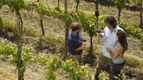 Clarksburg Wine Experience, Sacramento, Wine Tasting & Winery Tours
