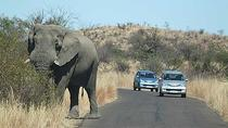 2 Night 3 day Safari to the Big Five Pilanesberg National Parkfrom Johannesburg, Johannesburg, ...