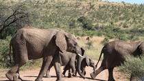 Day Safari from Johannesburg to Pilanesberg with an open vehicle safari drive, Johannesburg, Day ...