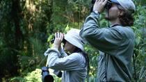 Special Birdwatching in Iguassu, Puerto Iguazu, Cultural Tours