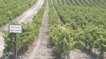 Private Jerez Winery and Jerez Brandy Experience from Seville, Seville, Wine Tasting & Winery Tours