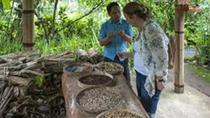 Cosmo Bali Package Tour: Lovina Dolphin, Batur Volcano, Bali Coffee Plantation, Bali, Coffee & Tea...