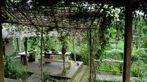 Cosmo Bali Package Tour Tirta Empul Coffee Plantation Batur Volcano Penglipuran, Bali, Coffee & Tea...