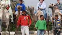 Horseback Camel or Donkey Ride Along the West Bank, Luxor