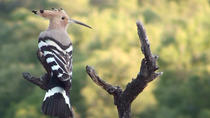 4-Ways Short Break Birding Tour in Catalonia, Tarragona, 4WD, ATV & Off-Road Tours