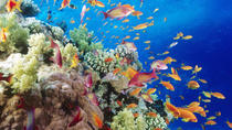 Snorkeling Cruise from Hurghada to Mahmaya, Giftun Islands, Hurghada, null