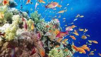 Snorkeling Cruise Mahmaya Giftun Island, Hurghada, null