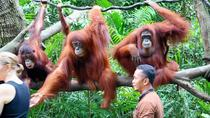 Singapore Zoo Ticket With Return Transfer, Singapore, Zoo Tickets & Passes