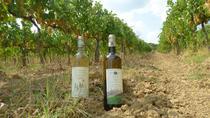 Gourmet Wine Tour San Gimignano Wine Tasting - San Quirico Winery, San Gimignano, Wine Tasting &...