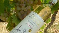 Maxi Gourmet Wine Tour San Gimignano Wine Tasting - San Quirico Winery, San Gimignano, Wine Tasting...