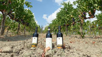 Maxi Wine Tour San Gimignano Wine Tasting - San Quirico Winery, San Gimignano, Wine Tasting &...