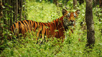 Private 3-Day Chitwan National Park Adventure from Kathmandu, Kathmandu, Nature & Wildlife