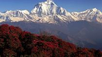 Private Tour: 5-Day Annapurna Poon Hill Trek from Pokhara, Pokhara, Multi-day Tours