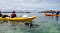Seal and Penguin Islands or Point Peron Sea Kayak Tour from Perth, Perth, Walking Tours