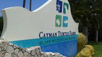 Cayman Turtle Farm and Stingray City Fun Day, Cayman Islands, Full-day Tours