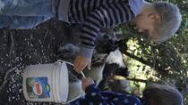 El Terruño de los Torres, Monteverde, Cultural Tours
