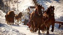 Horse Sleigh Ride in the Polish Countryside, Krakow, Horseback Riding