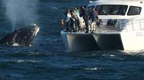 Boat Based Whale Watching from Hermanus, ヘルマナス