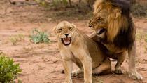 Buyela e-Africa , Full day safari tour in the Pilanesburg Big 5 nature reserve, Johannesburg,...