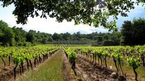 Private Tour of Small Carpathian Wine Route with The Red Stone Castle, Bratislava, Private ...