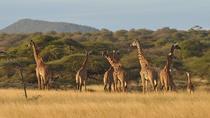 4 Day Tanzania Classic Safari - Lake Manyara, Serengeti & Ngorongoro crater, Arusha, 4WD, ATV &...