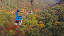 Private Maple Tree and Mt. Naejang Day Trip from Seoul, Seoul, Full-day Tours