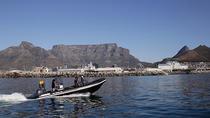 V&A Waterfront Ocean Safari, Cape Town, Day Cruises