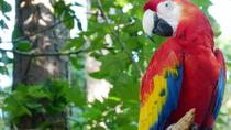 RioZoo Skip-the-Line Admission with Hotel Transfers, Rio de Janeiro, Zoo Tickets & Passes