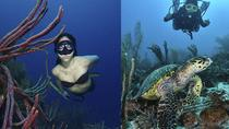LOS ROQUES UNDERWATER PHOTOGRAPHY COURSES AND WORKSHOPS, Caracas, Other Water Sports