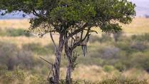 Animal Migration Safaris , Destination - Kenya, Nairobi, Cultural Tours