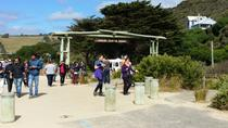 Full-Day Great Ocean Road Tour from Melbourne, Melbourne, Private Sightseeing Tours