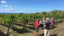 Wine and Food Tasting in the vineyard, Tropea, Wine Tasting & Winery Tours