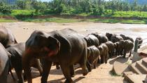 Shore Excursions Colombo port passenger Terminal to Kandy via Pinnawala, Colombo, Ports of Call ...