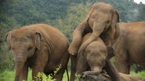 Shore Excursions Colombo port passenger Terminal to Pinnawala Zoo by car, Colombo, Ports of Call...
