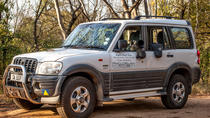 Private Kruger Safari in closed air-conditioned 4x4 vehicle, Kruger National Park, 4WD, ATV &...