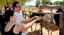 Highgate Ostrich Farm Tour, Garden Route, Nature & Wildlife
