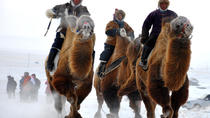Camel Festival, Ulaanbaatar, Nature & Wildlife