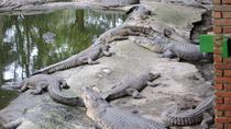 Miri Crocodile Farm (Mini Zoo), Miri, Zoo Tickets & Passes