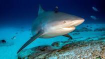 Bull Shark Scuba Diving Experience - 2 tank dive in Playa del Carmen, Playa del Carmen, Scuba Diving