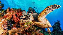 Discover Scuba Diving for Beginners - Scuba Dive in the Mexican Caribbean, Playa del Carmen, Scuba ...