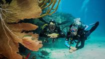 Double dive package in Playa del Carmen - Scuba dive in the Mexican Caribbean, Playa del Carmen,...