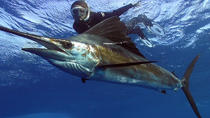 Swim with the sailfish - full day snorkeling experience, Playa del Carmen, Other Water Sports