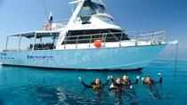 Great Barrier Reef Dive and Snorkel Cruise from Townsville or Magnetic Island, Townsville