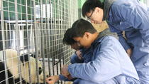 Be a Panda keeper for a day and Shangli Village Extension, Chengdu, Private Sightseeing Tours