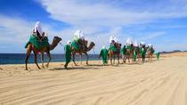 Camel Ride & Encounter, Los Cabos, Nature & Wildlife