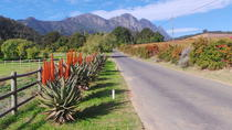 Full Day Wine Tour, Stellenbosch, Wine Tasting & Winery Tours