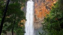Springbrook National Park Hiking Tour Including Purling Brook Falls from the Gold Coast, Gold ...