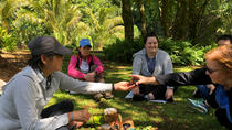 Forest Bathing in a Rain Forest, Oahu, City Tours