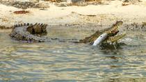 Crocodile Adventure Boat Tour in Cancun, Cancun, Nature & Wildlife