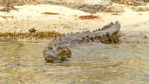Private Crocodile Tour from the Riviera Maya, Playa del Carmen, Scuba Diving